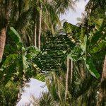 Calebe Simoes_Indomitable Tropic, 2019, Fotografie, Courtesy by the artist